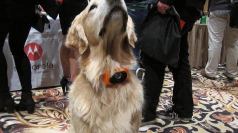 Apresentado na CES 2015, a Scout possui duas versões: a 5000 e a 2500 (desenvolvida para cachorros pequenos)